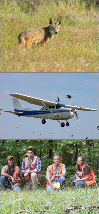 3 wildlife hazard
