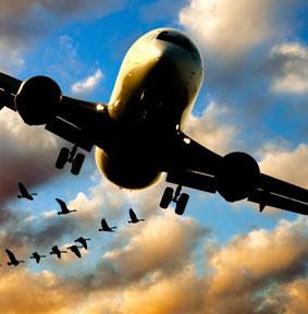 Airplane_5338085_w_geese_72dpi