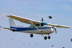 TR_110316_bird-strike